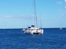 Dauphin Martinique